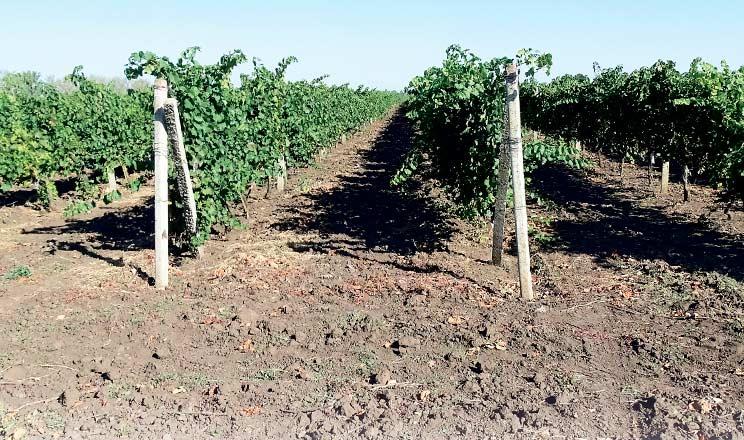 Параметрична класифікація ґрунтів