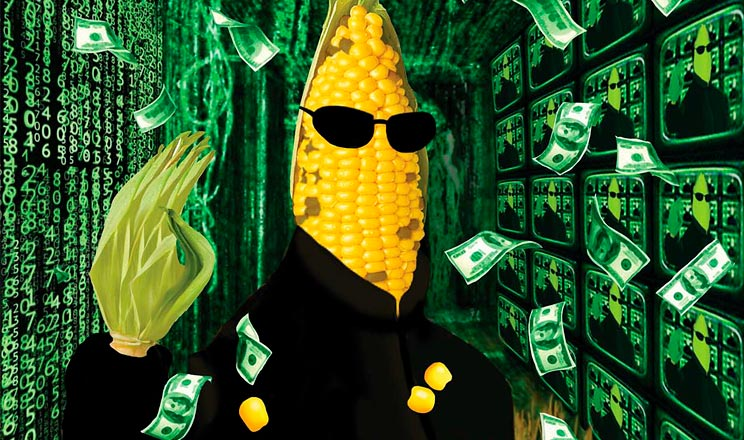 Хто кому кукурудза