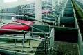 Оновлений свиноматочник київського господарства окупиться за два-три роки