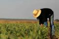Зміна технологій вирощування польових культур призводить до негативних наслідків