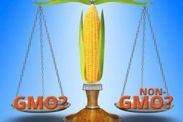 Швейцарія продовжує мораторій на вирощування ГМО-культур до кінця 2025 року