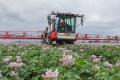 Вчені запропонували боротися з фітофторозом картоплі екстрактом хвоща