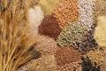 Набув чинності документ щодо визнання в ЄС української сертифікації насіння