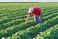Аграрний комітет підтримав зміни до закону про органіку