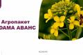 Агропакет ADAMA АВАНС допоміг отримати прибуток у надскладний сезон