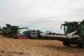 Частка пшениці в озимому клині АФ«Ольгопіль» становить майже 60%