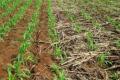Глибоке заорювання соломи не сприяє розкладанню рослинних решток у ґрунті
