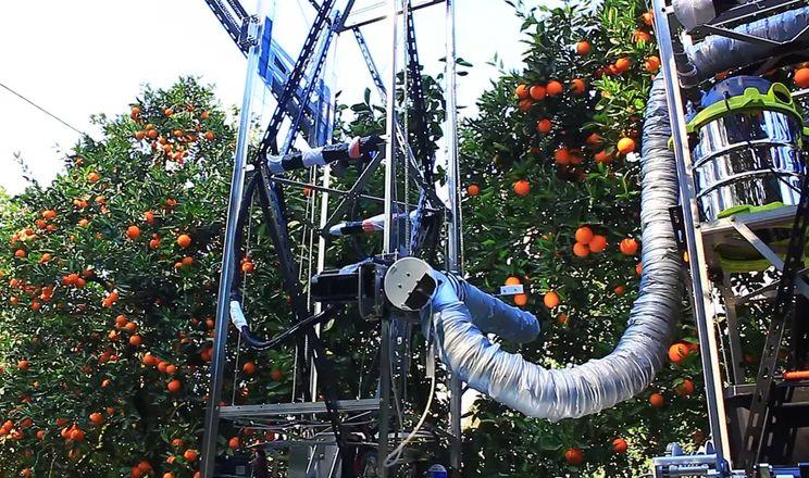 Робот збиратиме комерційний врожай яблук