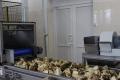Шепетівський цукровий комбінат встановив робота для контролю якості сировини