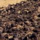 Заорювання соломи повертає у ґрунт до 40% елементів живлення і заощаджує кошти