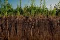 Незаорані сидерати сприяють збереженню вологи та покращенню структури ґрунту, – фермер