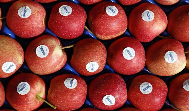 ФГ «Гадз» почало експортувати яблука у Велику Британію