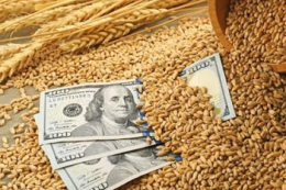 Експортні ціни на ячмінь продовжують зростати