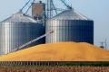 Завдяки кукурудзі запаси зерна на елеваторах зросли до 6,9 мільйона тонн