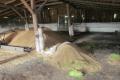 На Одещині злодії поцупили із зернового складу 20 тонн пшениці і ячменя