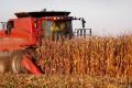 На Львівщині обмолотили лише 27% посівів кукурудзи