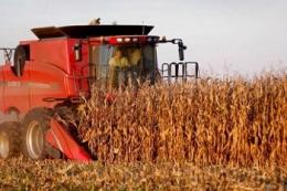 Урожайність кукурудзи в KSG Agro значно перевищує показники останніх років