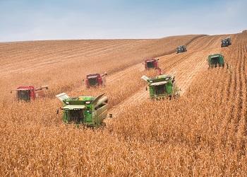 На Черкащині прогнозують на 60% вищий урожай зерна, ніж торік