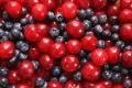 До Китаю найперспективніше експортувати черешню та лохину, – УПОА
