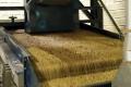 В Дагестані планують запустити рисовий елеватор