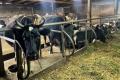 Львівське господарство планує придбати племінних корів