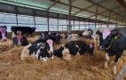 Як за допомогою вентиляції створити комфортне середовище для корів