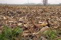 Чотири переваги застосування біодеструкторів для підвищення родючості ґрунту