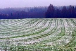 На заході України прогнозують до -11°C морозу