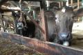 «Сімейні молочні ферми» запустили другу фазу інвестування