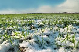 Опади у країнах-виробниках зерна сприятливо вплинули на посіви