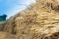 В Україні скорочуються площі з заорюванням соломи на добриво