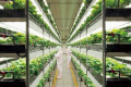 На 90 м² вертикальної ферми виростять стільки полуниці, як на 1 га землі