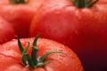 Комерційний гібрид томатів із стійкістю до ToBRFV вийде на ринок на початку 2021 року
