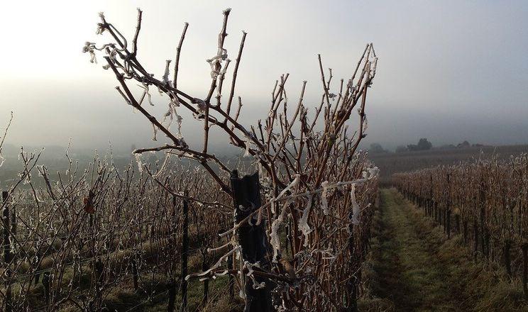На зимуючих шкідників більше впливає не мороз, а перепади температури
