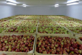 У сховищах ЄС залишилося на 16% більше яблук, ніж торік