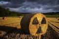 Поблизу Чорнобиля все ще збирають радіоактивні врожаї, - дослідження