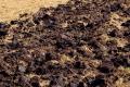 Заорювання великої кількості рослинних решток призводить до нагромадження фітопатогенів у ґрунті
