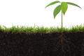 Названо регіони з найвищою якістю ґрунтів