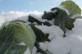 Морози в Іспанії провокують ріст цін на овочі в ЄС