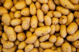 Румунські фермери запропонували план порятунку картоплярства
