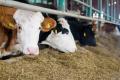 Cygnet виробив у 2020 році 6 млн л молока