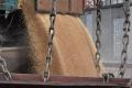 В декількох портах спостерігається зниження цін на пшеницю 2 класу