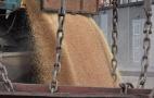 З початку року Маріупольський порт переробив 196,7 тисяч тонн зернових