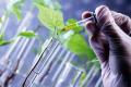 Інокулянти БТУ-ЦЕНТР містять найефективніші штами мікроорганізмів