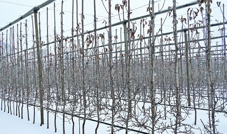 Виклики сезону 2020 року та підготовка саду до зими