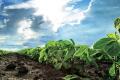 Рекомендації виробникам східної частини Лісостепу щодо вирощування сої