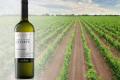 У Японію відвантажили першу партію українських вин