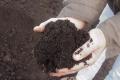 Дигестат знижує рівень кислотності ґрунту вдвічі, – досвід «Органік-Д»
