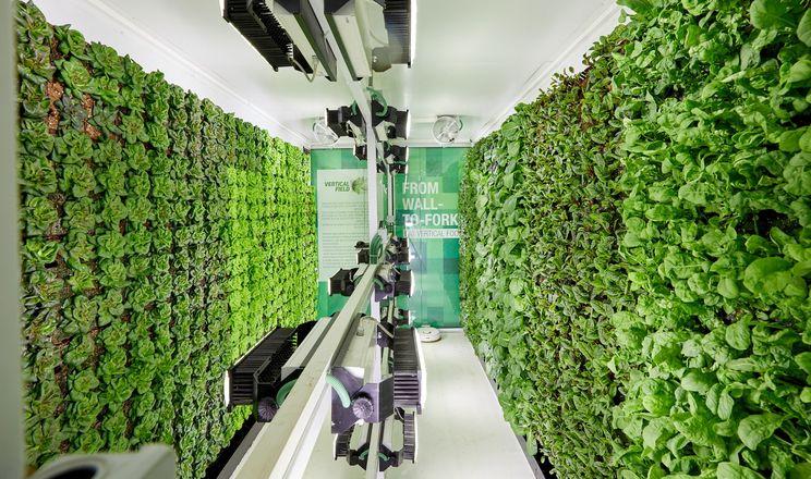 В українських супермаркетах з'являться вертикальні ферми зелені