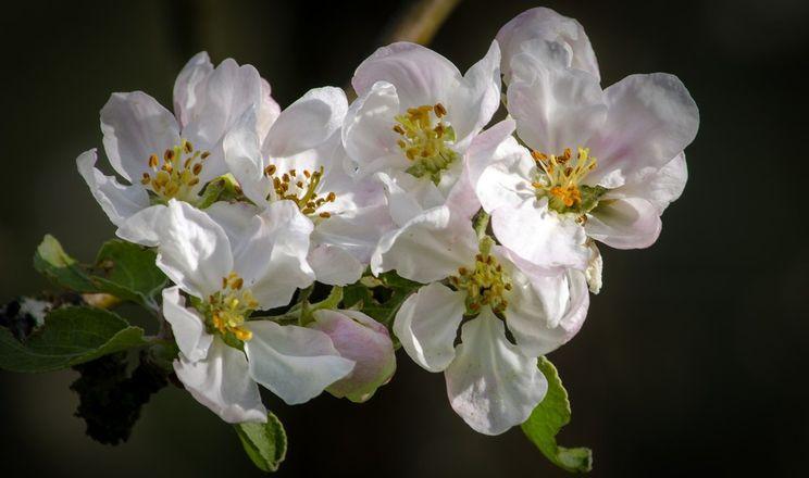 Як застосовують проріджування квітів у садах: ручне, механічне та хімічне